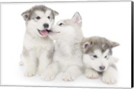 Puppies 1 Fine-Art Print