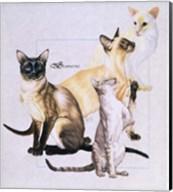 Siamese Fine-Art Print