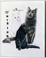 Turkish Angora Fine-Art Print