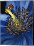 Lazuline Fine-Art Print