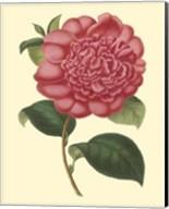 Camellia Garden I Fine-Art Print