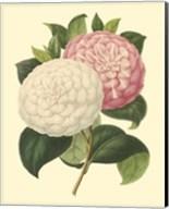 Camellia Garden IV Fine-Art Print