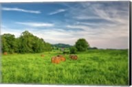 rolled hay bales Fine-Art Print