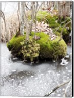 Winter Bog Fine-Art Print
