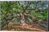 Angel Oak Fine-Art Print