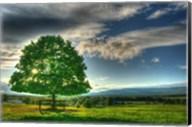 Blue Chip Sunset Tree Fine-Art Print