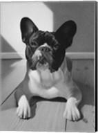 Cudi The Dawg Fine-Art Print