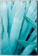 Abstract Agava I Color Fine-Art Print