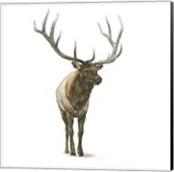 Natural Majesty I Fine-Art Print
