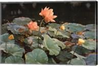 Lotus Fine-Art Print