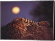 Leopard with Rising Moon Fine-Art Print