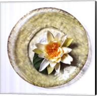Lotus Flower Fine-Art Print