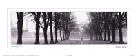 Avenue of Trees Framed Print