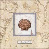 Sea Treasure II Framed Print