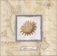 Sea Treasure III Framed Print