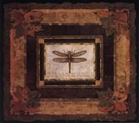Dragonfly II Framed Print