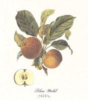 Apple/Blanc-Michel Framed Print