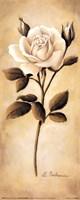 White Roses II Framed Print