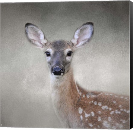 Framed Little Miss Lashes White Tailed Fawn Print