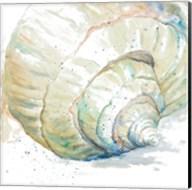 Water Conch Fine-Art Print