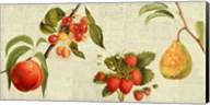 Fruits de Saison Fine-Art Print