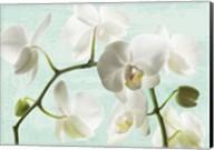 Celadon Orchids Fine-Art Print