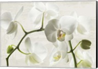 Ivory Orchids Fine-Art Print