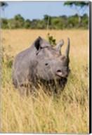 Kenya, Maasai Mara National Reserve, Black Rhinoceros Fine-Art Print