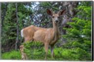 Deer In The Assiniboine Park, Canada Fine-Art Print