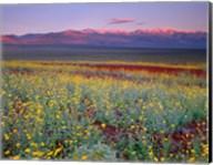 Desert Sunflower Landscape, Death Valley NP, California Fine-Art Print