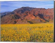 Black Mountains And Desert Sunflowers, Death Valley NP, California Fine-Art Print