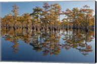 Pond Cyprus In Early Morning Light, Georgia Fine-Art Print