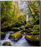 Mccord Creek In Autumn, Oregon Fine-Art Print
