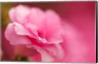 Bright Pink Azalea Fine-Art Print