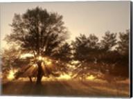 Sunrise Through Fog And Trees At Cades Cove Fine-Art Print