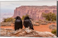 Pair Of Ravens On A Log Fine-Art Print