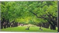 Deer Resting In A Sylvan Orchard Fine-Art Print