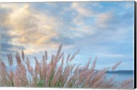 Scenic View Of Pennisetum Ornamental Grasses Fine-Art Print