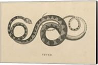 Vintage Viper Fine-Art Print