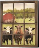 Three Moo View Fine-Art Print