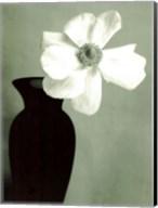 Single Anemone Fine-Art Print