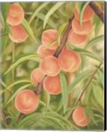 Peach Perfect Fine-Art Print