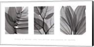 Leaf Collection Fine-Art Print