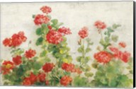 Red Geraniums on White v2 Fine-Art Print
