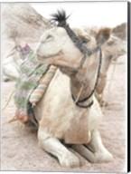Camel 2 Fine-Art Print