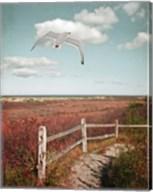 Gull over Coastal Trail Fine-Art Print