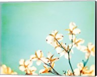 Blossoms Adrift Fine-Art Print