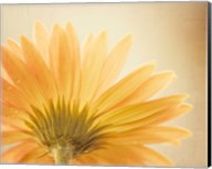 Butterscotch Fine-Art Print