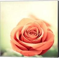 My Perfect Rose Fine-Art Print