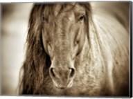 Mustang Sally Fine-Art Print